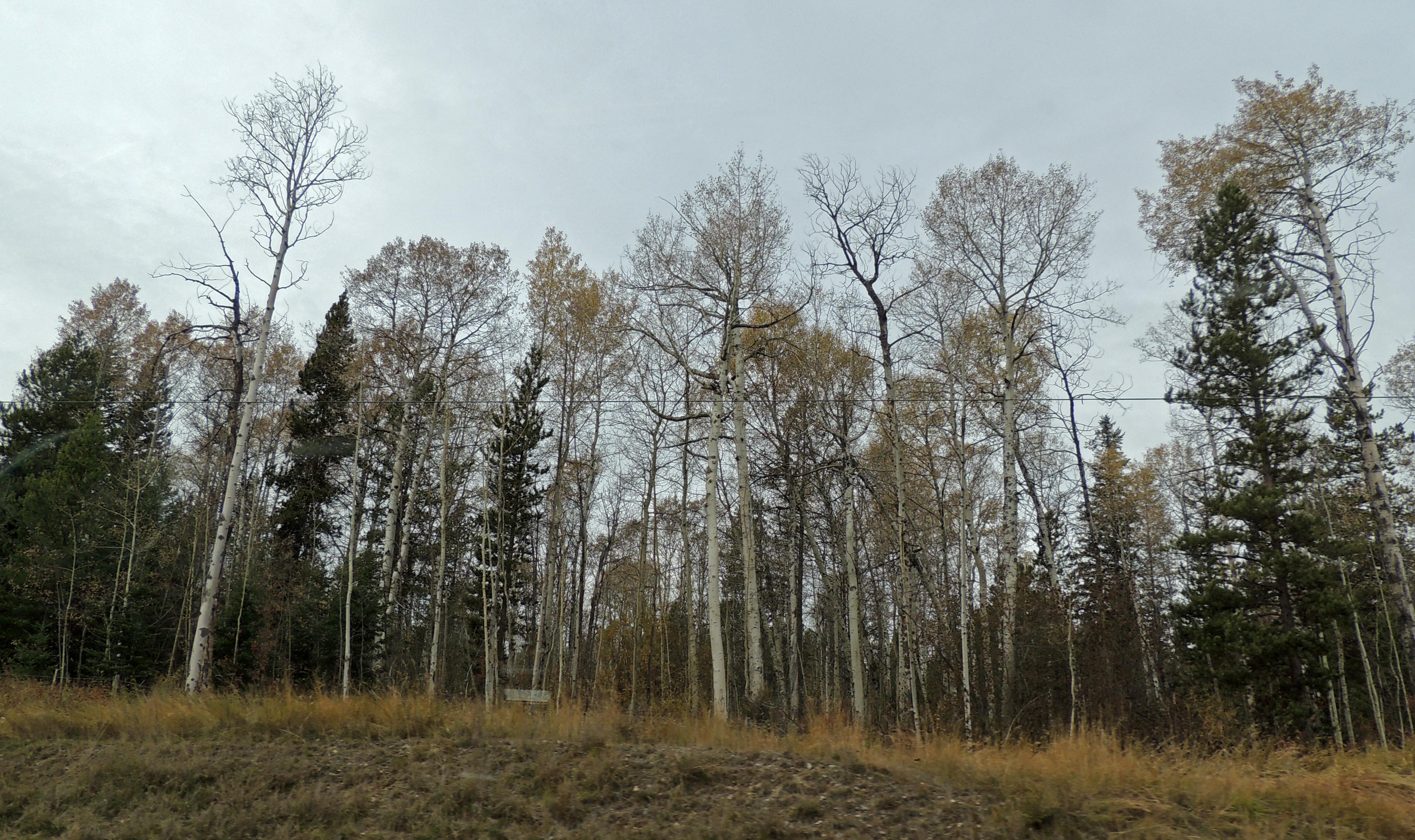 Trees [1]
