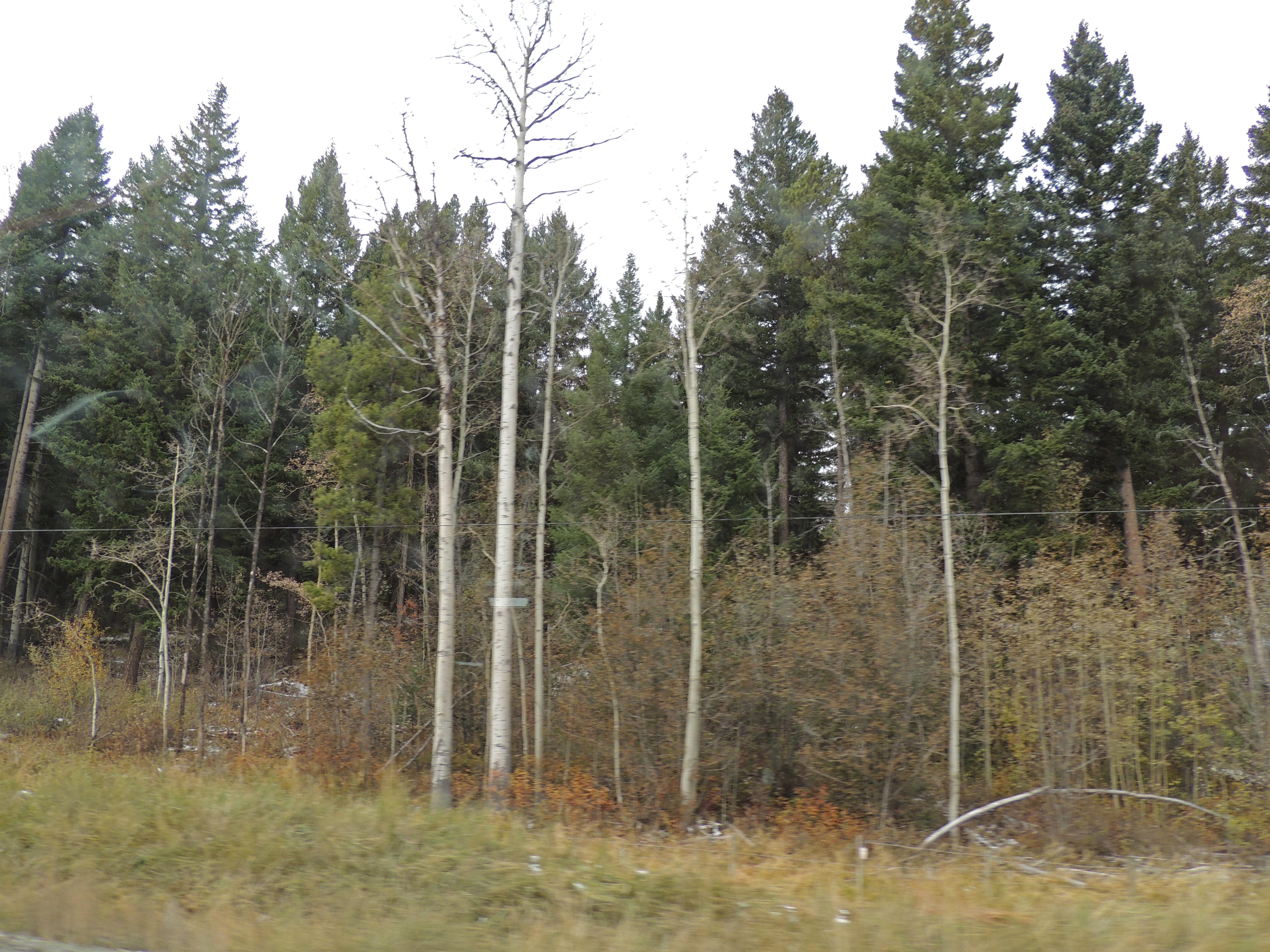 Trees [4]