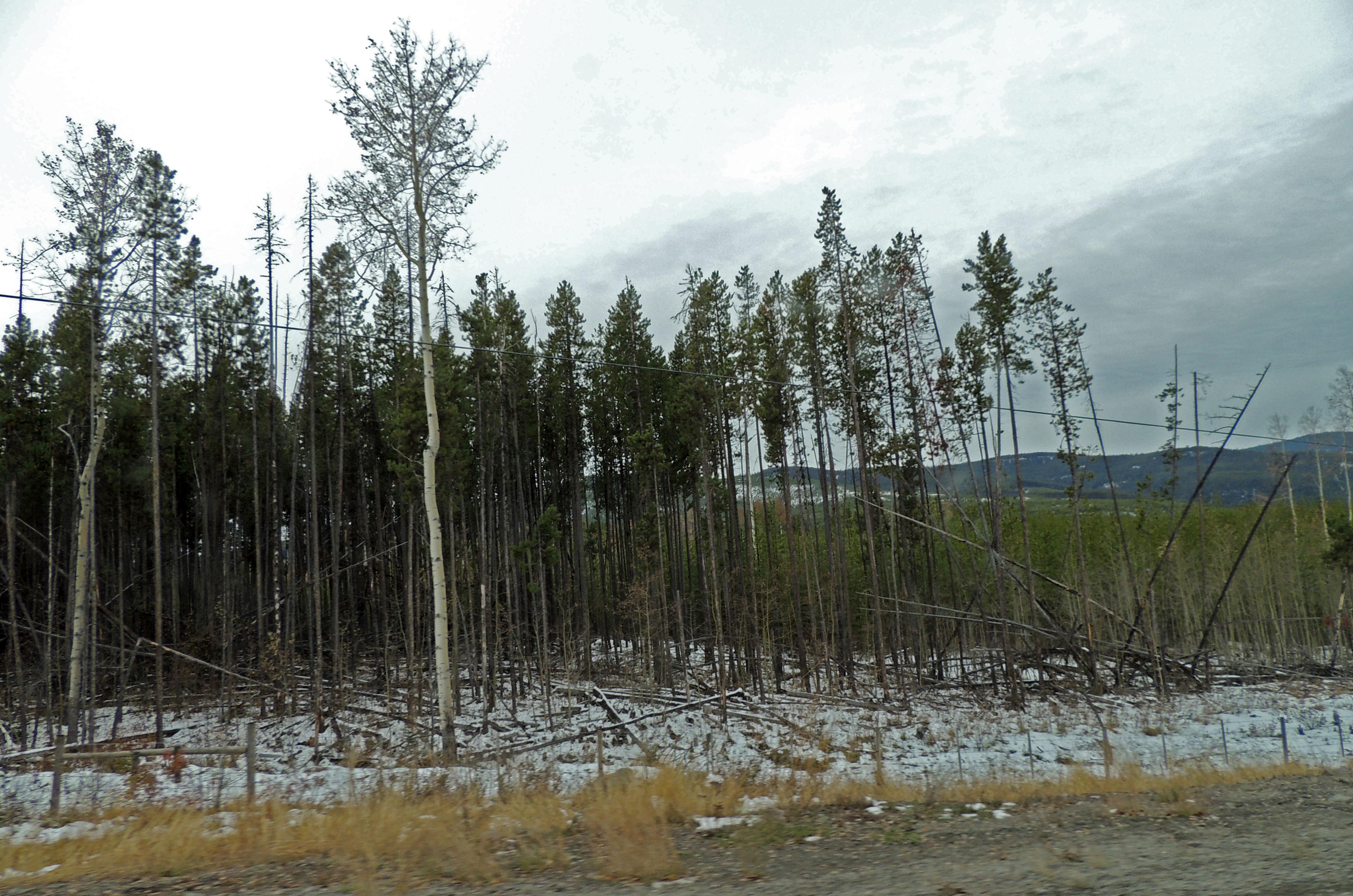 Trees [5]