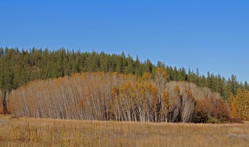 Trees [6]